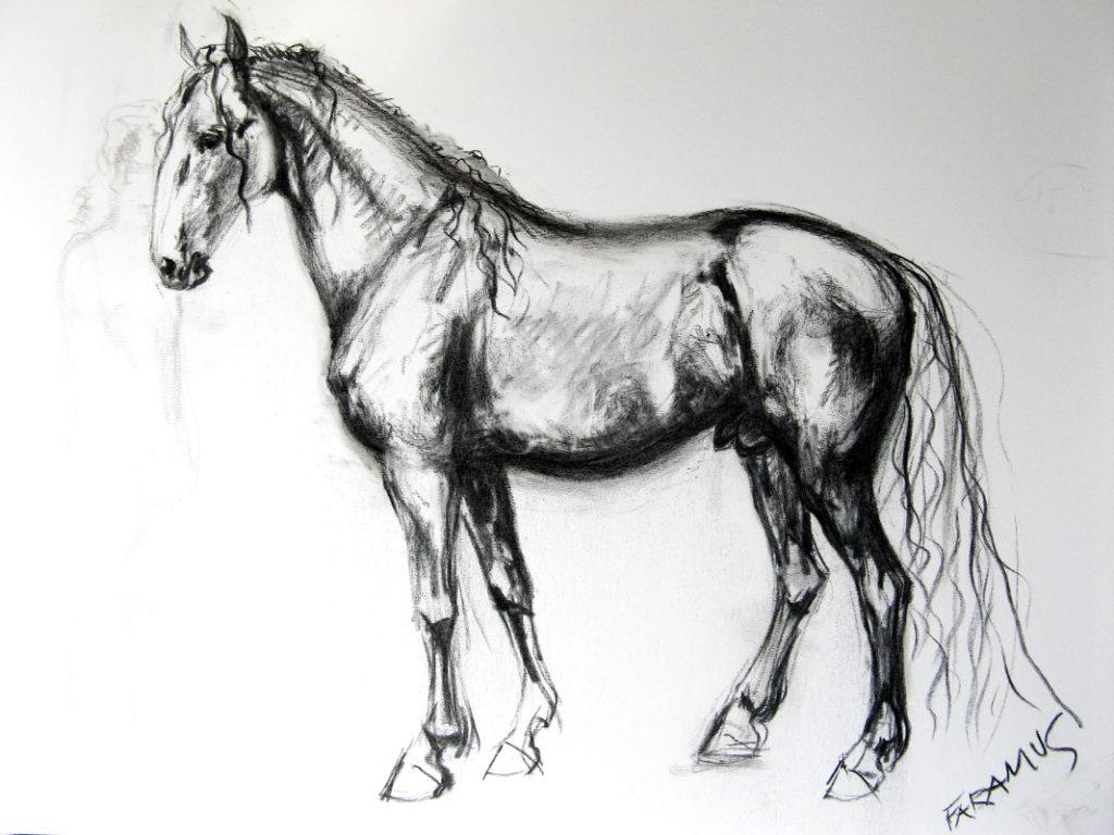 Faramus - portrét chovného hřebce starokladrubského koně / kresba uhlem / 2007 / 100 x 70 cm