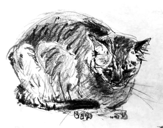 kresba kocoura, kočka domácí, ručně malovaný, obraz na stěnu, tužka na papíře, malba od umělce, česká malířka, galerie obrazů zvířat, moderní umění, umělecké dílo na prodej, obraz podle předlohy