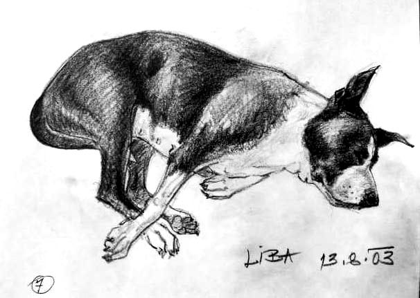 Liba č. 2 - portrét fenky amerického stafordšírského teriéra / kresba tužkou na papíře / 2003 / 30 x 21 cm