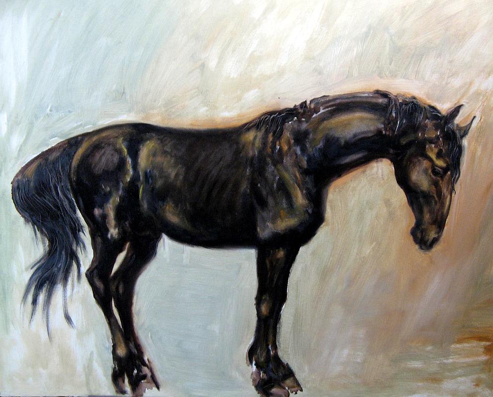 Starokladrubský hřebec Rosario / portrét hřebce z chovné stáje / olej na plátně / 2009 / 100 x 70 cm