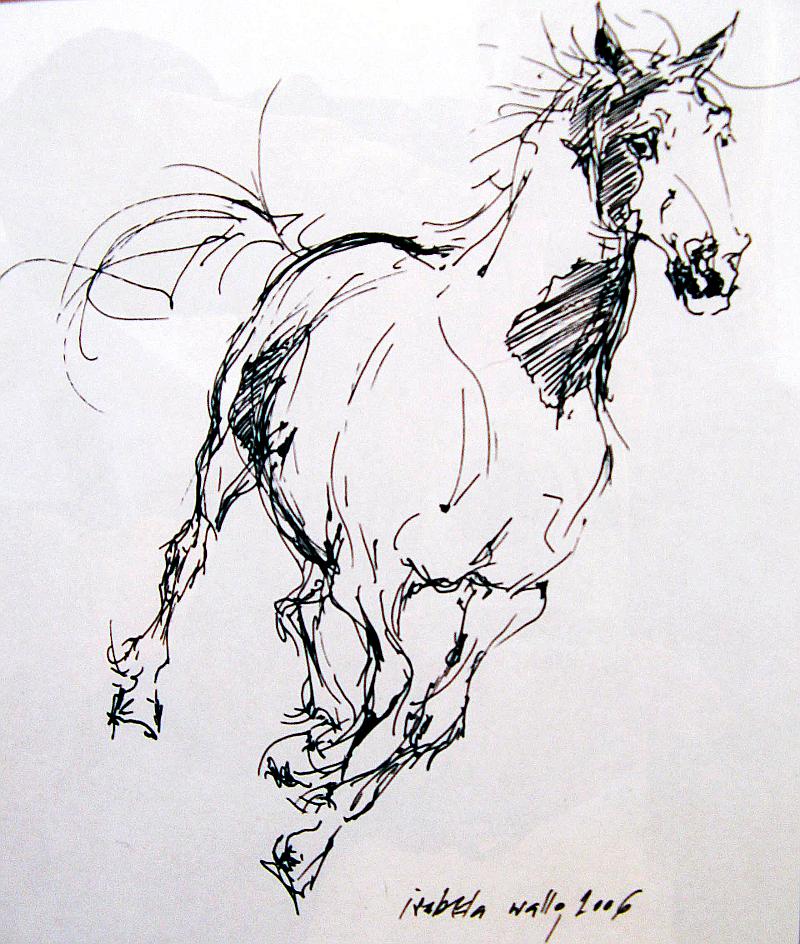 Běžící kůň appaloosa / tuš na papíře / 2006 / 21 x 30 cm