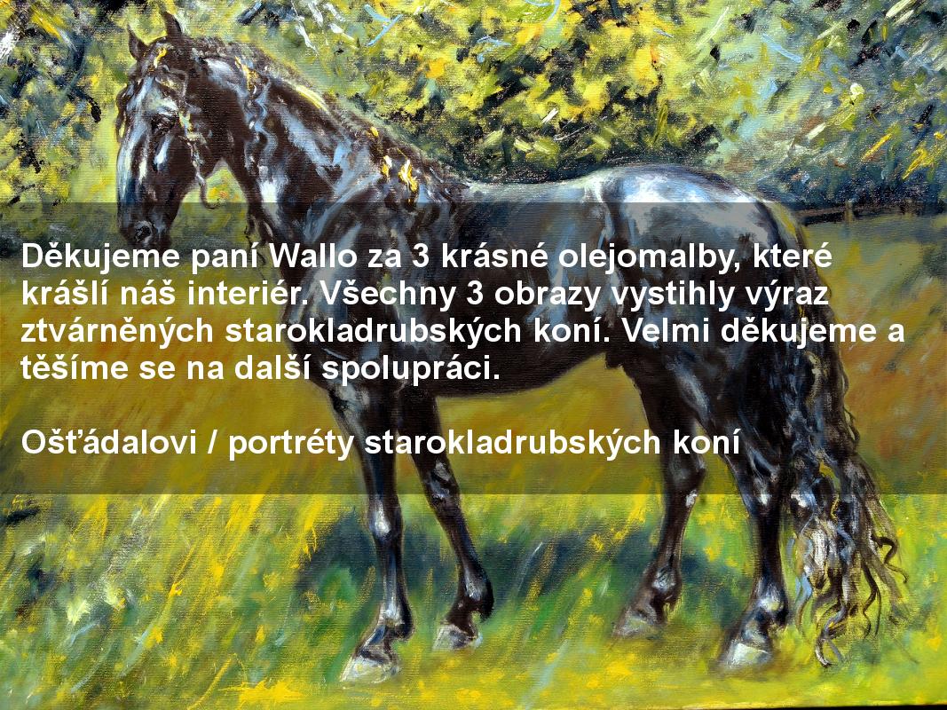 starokladrubský kůň, portrét koně, vraník, ručně malovaný, obraz na stěnu, olejomalba, malba od umělce, česká malířka, galerie obrazů zvířat, moderní umění, umělecké dílo na prodej, reference