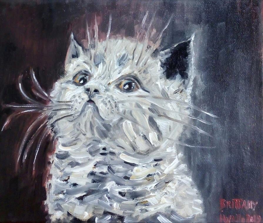 Brittany / portrét kotěte britské modré kočky / olej na plátně / 2019 / rozměry